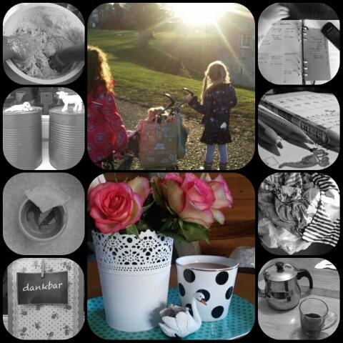 collage_20160126210652490.jpg